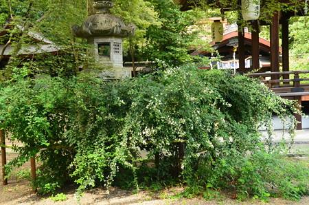 梨木神社の萩