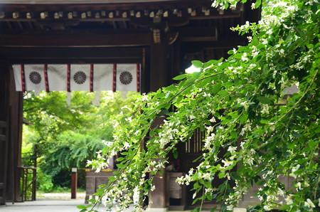 梨木神社の白萩