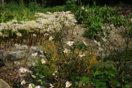 秋明菊と白花彼岸花