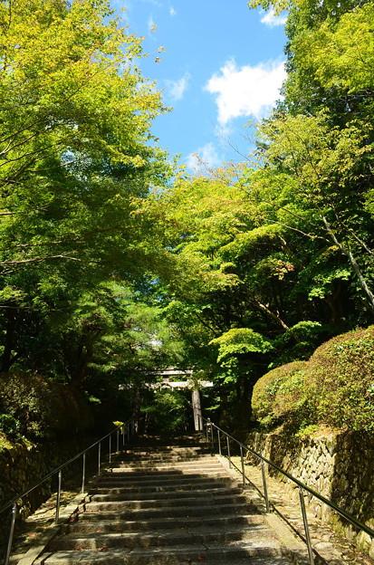 秋空の大原野神社