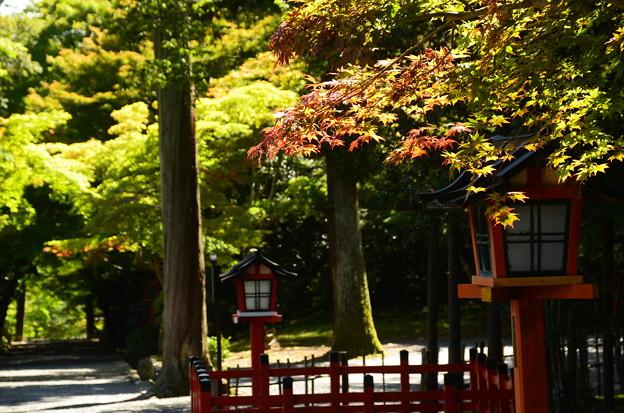 少し色づいた大原野神社