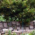 写真: 仕切りの かわら塀