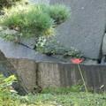 松と彼岸花