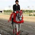 写真: 川崎競馬の誘導馬05月開催 カーネーションVer-120514-01-large