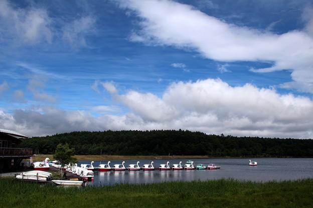 女神湖の白鳥ボート