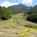 Photos: 鞍掛山頂に向かって広がる棚田