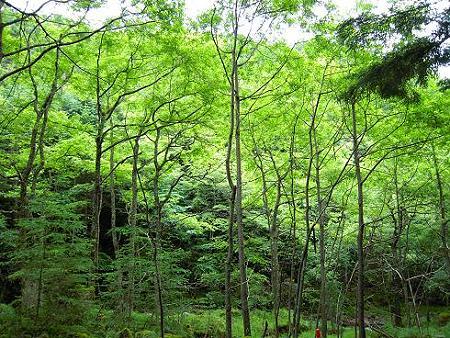 夏沢鉱泉に向かう林道