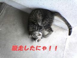 2005/5/10 脱走!