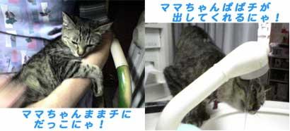 2005/5/6-1 にゃんこ姫にゃ!?