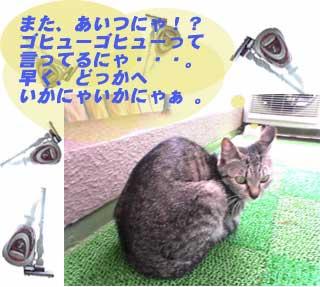 2005/5/21-1【猫写真】天敵再び!
