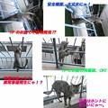 2005/6/18【猫写真】ベランダパトロール