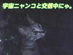 2005/6/29 【猫写真】宇宙戦争見たにゃ!