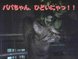 2005/6/30【猫写真】閉め出されたにゃ!?