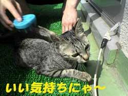 2005/7/7【猫写真】いい気持ちにゃ~