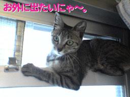 2005/7/4【猫写真】お外出たいにゃ~。