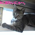 Photos: 2005/7/4【猫写真】お外出たいにゃ~。