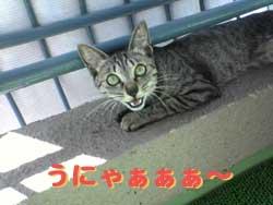 2005/7/27【猫写真】うにゃ~!