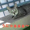 Photos: 2005/7/27【猫写真】うにゃ~!