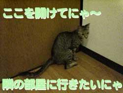 2005/7/20【猫写真】開けてにゃ~!