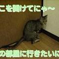 Photos: 2005/7/20【猫写真】開けてにゃ~!