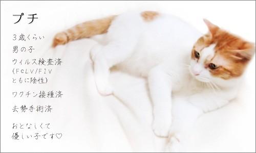 110903-新しい家族募集ちぅ!~プチくん~