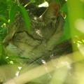 写真: ねこ寺の猫 2