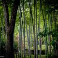 Photos: 1000万画素の描写力