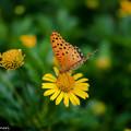 Photos: 蝶と花