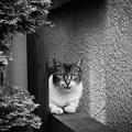 写真: 下町猫