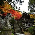Photos: 『趣秋。。。』