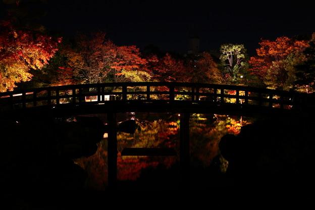 写真: 『影揺。。。』 ~白鳥庭園~
