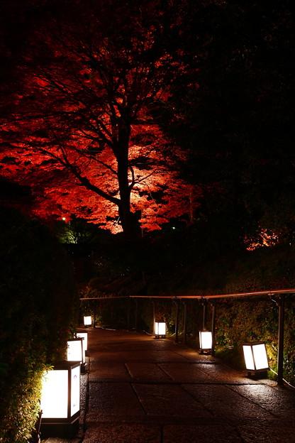 写真: 『秋の小路。。。』