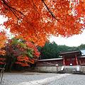 写真: 『秋赴。。。』