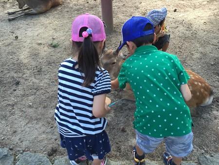 20150719奈良公園の鹿(2)