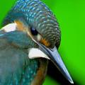 Eis Vogel