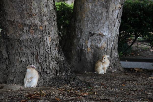 雨宿りのウサギ