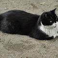 写真: 猫と遊ぶ(3)