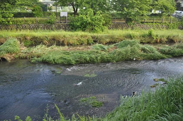 5月13日、黒目川・落合川合流点付近の被害状況