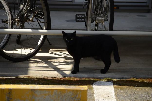 5月26日、散歩道で出遭った黒猫