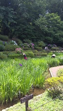薬師池公園 花菖蒲と花摘み娘