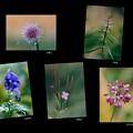 写真: 山の花達