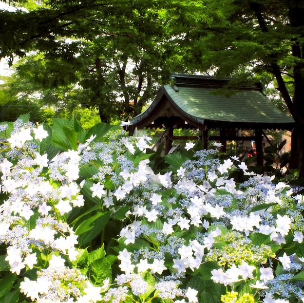 写真: 御裳神社