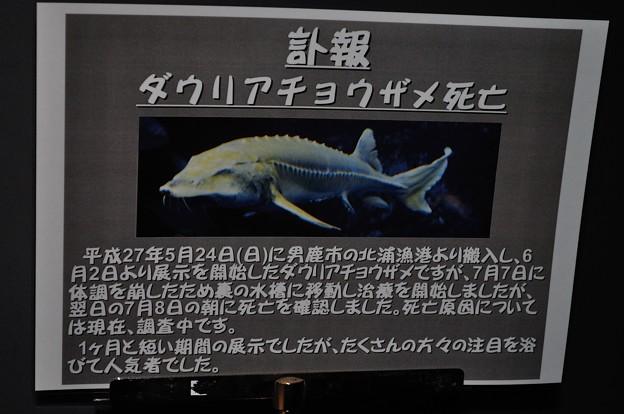 男鹿水族館GAO 8