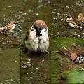 Photos: 水浴び中