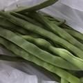 Photos: 野菜11
