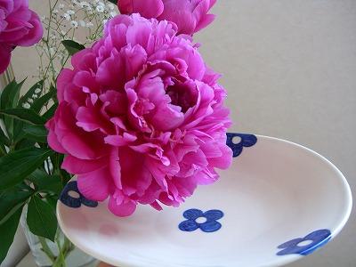 Flower ?