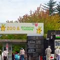写真: 東山動植物園(2015年9月)No - 1:葉っぱが一部紅葉してた、正門前の木