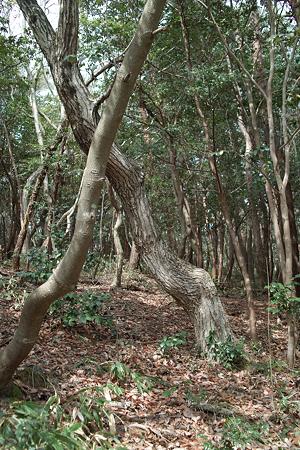 trees03162012dp2-04
