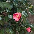 Photos: flower03262012dp2-02