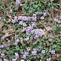 Photos: Flower04082012sd15-02